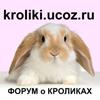 Форум о карликовых и декоративных кроликах